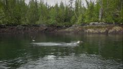 Hunting bald eagles at sea - Alaska Stock Footage