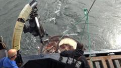 Alaskan crab fishing boat - trap rise up Stock Footage