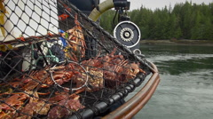 Opilio crabs in a trap - alaskan crab fishing, two footage Stock Footage