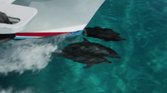 Four Atlantic Spotted Dolphins bowriding Stock Footage