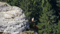 Bird Saxon Switzerland national park Stock Footage