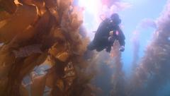Diver appears through kelp fronds with torch Stock Footage