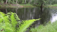 Stock Video Footage of fern leaves in background of village pond glittering raindrops