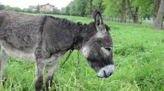 Wet donkey animal graze in pasture grass and car go in rain Stock Footage