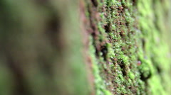 Moos close up in national park Stock Footage