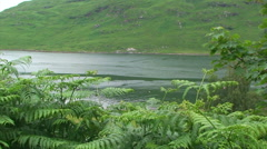 Fjord behind a forest of ferns, framed by trees Stock Footage