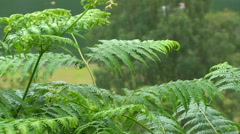 Fern leaves on a fjord Stock Footage