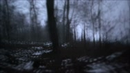 Stock Video Footage of Monster running in bush