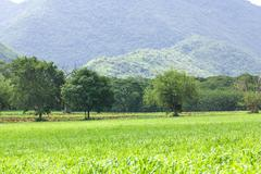 green grass field - stock photo
