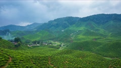 Beautiful sunrise at tea plantation - stock footage