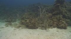 Habituated bottlenose dolphin (Tursiops truncatus), Roatan Island, Honduras Stock Footage
