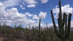 4K Arizona Desert Saguaro Cactus Clouds Landscape Time Lapse Stock Footage