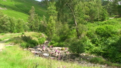 Mountain stream in between of green lush vegetation Stock Footage