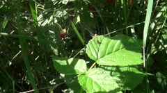 Spider web zoom in in a bush Stock Footage