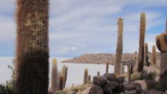 UYUNI ancient cactus Stock Footage