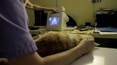 Echography on an cat Stock Footage