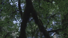 Slide Across the Forest Canopy Stock Footage