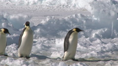 Emperor penguins (Aptenodytes forsteri), Cape Washington Stock Footage