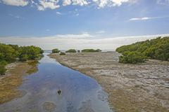 sub-tropical stream entering into an ocean bay at low tide - stock photo
