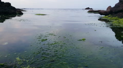 Sozopol seaside and harbor / Algae  Stock Footage