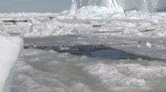 Emperor penguin (Aptenodytes forsteri) surfacing at ice hole, Cape Washington Stock Footage