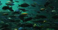 Stock Video Footage of 1875 Many Different Colorfull Fish Swimming, HD
