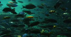1875 Many Different Colorfull Fish Swimming, 4K Stock Footage