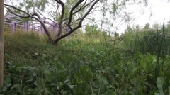 Vertical Mesquite Tree Shot over Marshy Grass Area Springs Preserve Stock Footage