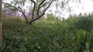 Stock Video Footage of Vertical Mesquite Tree Shot over Marshy Grass Area Springs Preserve