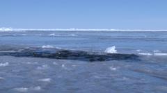 Emperor penguins (Aptenodytes forsteri), Cape Washington Stock Footage