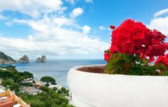 red geraniums with faraglioni in background, capri island. - stock photo