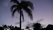 Stock Video Footage of Coconut Trees Blowing in Breeze at Dusk, Long Bay, Antigua, Caribbean