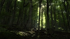Sunlight penetrates the forest and shine wood Stock Footage