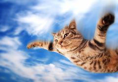 Flying funny kitten Stock Photos