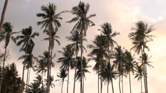 Coconut trees in the wind Stock Footage
