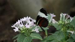 butterfly on flower - stock footage