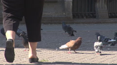 Old woman feet walking near pigeons, birds get used with people, do not fly away - stock footage