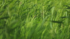 Stock Video Footage Footage grass green world Stock Footage