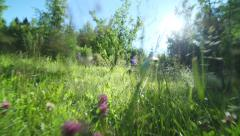 Stock Video Footage green meadow camera moves through the grass and flowers Stock Footage