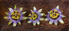 passionflower flower - stock photo