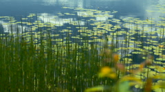 Stock Video Footagesky reflected in the lake water lilies and reeds Stock Footage