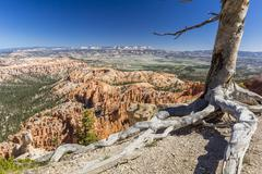 Bryce Canyon Amphitheater, Bryce Canyon National Park, Utah, USA Stock Photos