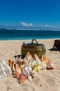 conchs and seashells for sale on a beach - stock photo