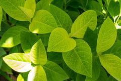 Background of fresh green leaves Stock Photos