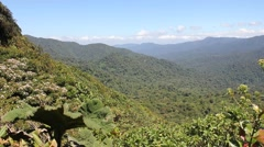 Jungle Landscape of Costa Rica Stock Footage