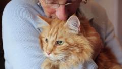 Senior woman holds and is affectionate with maine coon cat Stock Footage