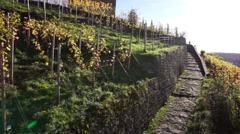 Vineyard and fort against clear sky - stock footage