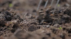 Loosening the soil low angle shot - stock footage