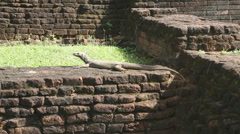 The view of big lizard in Sigiriya, an ancient palace located in Sri Lanka. Stock Footage