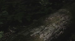 Somber fallen tree in the forest Stock Footage